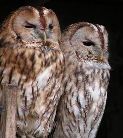 night-owl-tenants